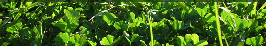 Alagua ecotecnolog a 2010 for Vater ecologico